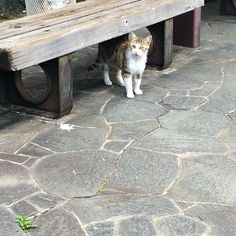 次々遭遇中いいこだねーいいこだねー #尾道ネコ歩き by azukki