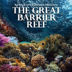 Time for a dose of Attenborough  #DavidAttenborough #GreatBarrierReef #Love by kayleighbrown00 http://ift.tt/1UokkV2