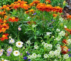 Cele mai rezistente flori la umbra - Casa și Grădina