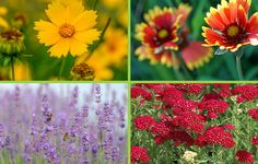 Beautify your garden with these tried and true flower combinations for any season.