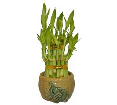feng shui mega store buy feng shui products cures and supplies for all your buy feng shui feng