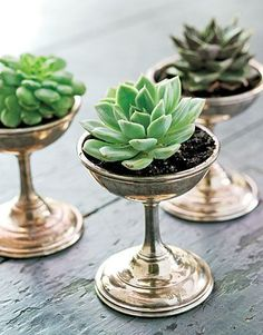 Ice cream dishes, from a collection of vintage hotel silver, proffer tiny succulents, a sweet alternative to the typical centerpiece when grouped together.