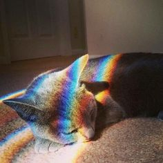 Imagen de cat, rainbow, and cute