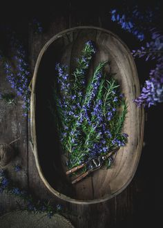 Rosemary Simple Syrup by Eva Kosmas Flores This rosemary simple syrup can be made with either honey or granulated sugar, and adds the most delicious floral and herbal hint to any beverage! Rosemary Simple Syrup, Clematis Vine, Ivy Plants, Ivy House, Easy Family Meals, Landscaping Plants, Farm Life, Natural Remedies, Herbalism