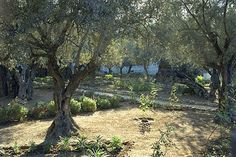 Garden of Gethsemane ~ I will never forget the time we spent praying in the garden where Jesus spent his last hours.