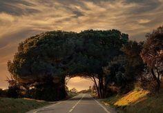 Зелёная арка в Португалии