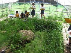 益城町立飯野小学校~ここが自慢のページ~