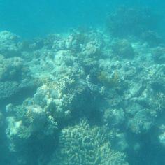 Great Barrier Reef  - - - -  #tagsforlikes #like #follow #australia #like4like #follow4follow #followforfollow #likeforlike #tumblr #love #vogue #aphlase #gudrun #instagram #greatbarrierreef #reef #coral #cute #instalike #sweet #lol #tags #shoutout #instavogue #insta #voguegurl by aphlase http://ift.tt/1UokkV2