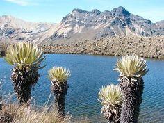 🥇Parque nacional natural los nevados - Senderismo Colombia Mountains, Nature, Travel, Spectacled Bear, Mesas, Travel Plan, Hiking Trails, Naturaleza, Viajes
