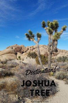 Go on your next adventure to Joshua Tree National Park! The park hosts an amazing array of terrain, plants and wildlife. Its' intriguing Joshua Trees, and huge boulders, are warmly inviting as are the mild temperatures. Joshua Tree National Park, National Parks, Heartland Rv, Desert Life, Tourist Spots, Plan Your Trip, Great View, Stargazing, Bouldering