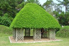 a home literally made from trees, using the art of weaving