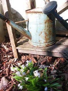 752 Best Watering Cans Images Watering Plants Garden Junk Garden
