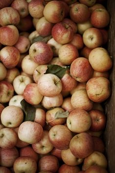"""squaremeal: """" (via autumn / …) """" i went apple-picking this week. it's a bit silly how many apples and mushrooms exist in my home right now… and that's why i love fall."""