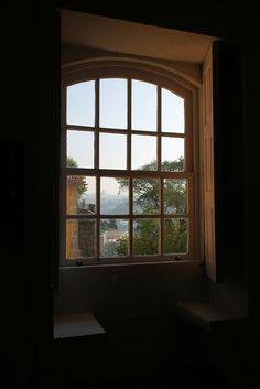 #Pormenores: Cortaderia - Planta invasora; Lugar do Areínho - Oliveira do Douro; Convento de Mafra – Portugal; Portão; Tunísia; #CooperativaÁrvore - Porto