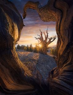 Heart of the Tree by Marc  Adamus - Photo 186569819 / 500px