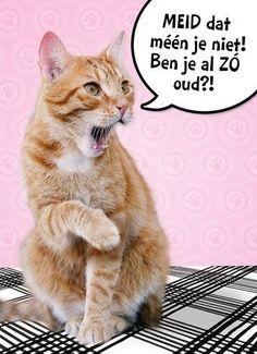 The Number Happy Birthday Meme Birthday Text, Happy Birthday Funny, Happy Birthday Quotes, Happy Birthday Wishes, Birthday Stuff, Funny Friday Memes, Funny Nurse Quotes, Grumpy Cat Humor, Happy B Day