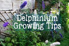 60 Herbal Plants to Grow for Homemade Tea   Empress of Dirt Diy Garden Projects, Garden Crafts, Garden Art, Overwintering Geraniums, Hummingbird Migration, Growing Ginger, Avocado Plant, Garden Mirrors, Garden Balls