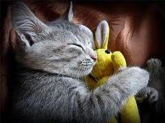 even animals sleep with toys