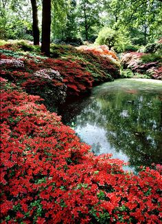 Isabella Plantation in Richmond Park is a park & national nature reserve, Wimbledon, England Richmond Upon Thames, Richmond Park, Richmond Virginia, Beautiful World, Beautiful Gardens, Beautiful Places, Beautiful Scenery, Amazing Gardens, Parks