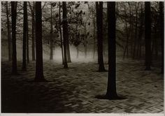"""Scott Mutter """"Forest"""""""