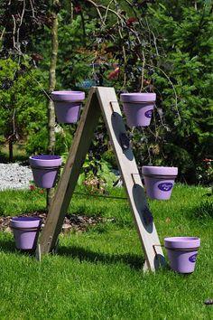 7 kwiatów: Pomysły na ozdobę ogrodu.