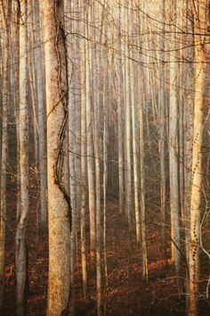 "stephencrutch:  ""Solstice Forest 2  """