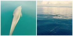 Windstar Cruises' Passage Through Panama