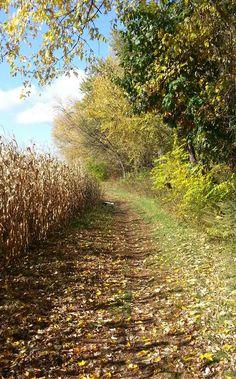 Walk along the Meadows, Farmington - Center of CT Photo Contest - #FallinCT14 #CenterofCT