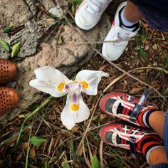 El amor es hambre. Tres contemplando a la flor y su deseo. Tres sueños de carne.