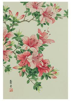 Azalea, n.d., by Nishimura Hodō (Gado) (active 1930s)