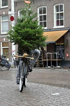 Someone goes Christmas tree shopping in Amsterdam last year.