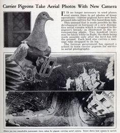 pigeon drones