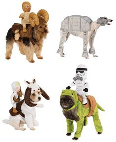 My husband better not see these, or Halloween will be trouble for my Chiweenie