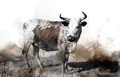 Available in a range of sizes. - Delivery is FREE to anywhere in South Africa! Cattle, Farm Animals, Reflection, Cow, Moose Art, Canvas Prints, African, Watercolor, Pictures