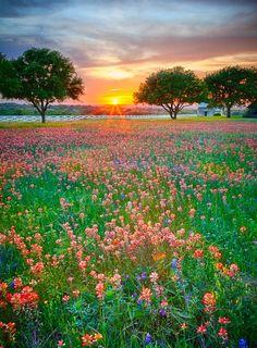 Flowers fields , Paintbrush Sunset by Richard Siggins