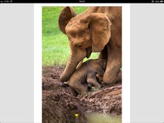 Mamma e figlio amore puro