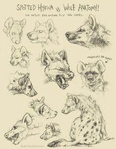 Learning to draw Freya's hyena form