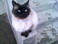 Love my cat ♥ :* sweetie