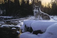 1022 Wolf HD Wallpapers and Background Images - Wallpaper Abyss - Page 14 Artist Canvas, Canvas Art, Canvas Prints, Widescreen Wallpaper, Computer Wallpaper, Wolf Painting, Background Images Wallpapers, Desktop Backgrounds, Howl At The Moon