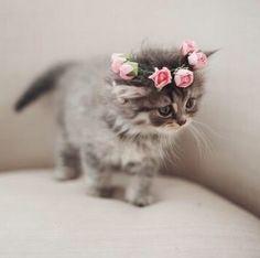 Eu quer uuu ♡ ❤