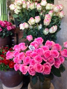 Gorgeous roses at Moulie florist in the 7th.