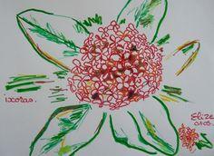 l'ixoras est une fleur qui pousse en bouquet, l'ensemble de la plante forme des buissons. C'est une fleur très courante aux Antilles. #dessin #fleur http://pigmentropie.fr