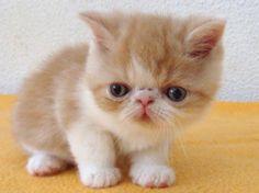 Exotic Gatitos Blancos 'el amor que mamá' Marcapáginas,marcapáginas