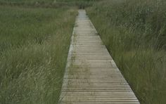 Build A Wooden Walkway Wooden Walkways, Walk This Way, Fashion News, Diys, Yard, Shelves, Home, Decor, Style