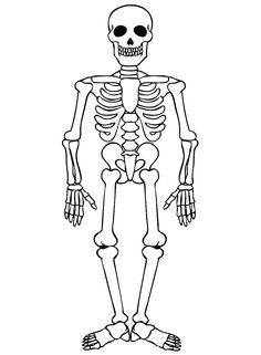 skelet kleurplaat