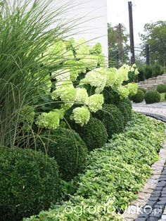 Hydrangeas and grasses!  Pretty