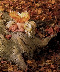 Anne Geddes - Autumn Fairy Baby