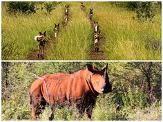 DayTreasure: Royal Madikwe - Madikwe Game Reserve Game Reserve, Wildlife, Horses, Games, Animals, Travel, Animales, Animaux, Horse