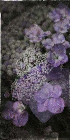 "Flowers in Neutral Moment-2014 ""Hydrangea"" Archival pigment print Photo by Soichi Oshika"