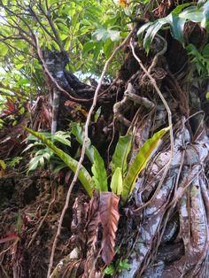 Ishigaki, Plants, Plant, Planets